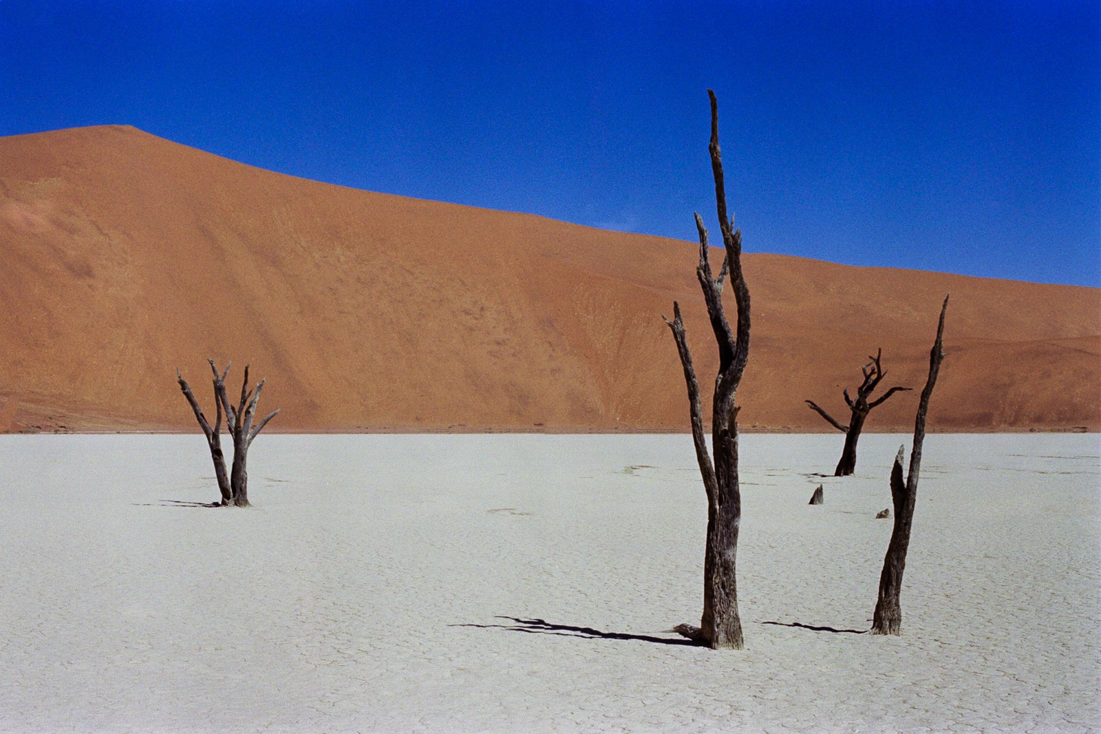 namibia desert scene in deadvlei dead trees in salt pan