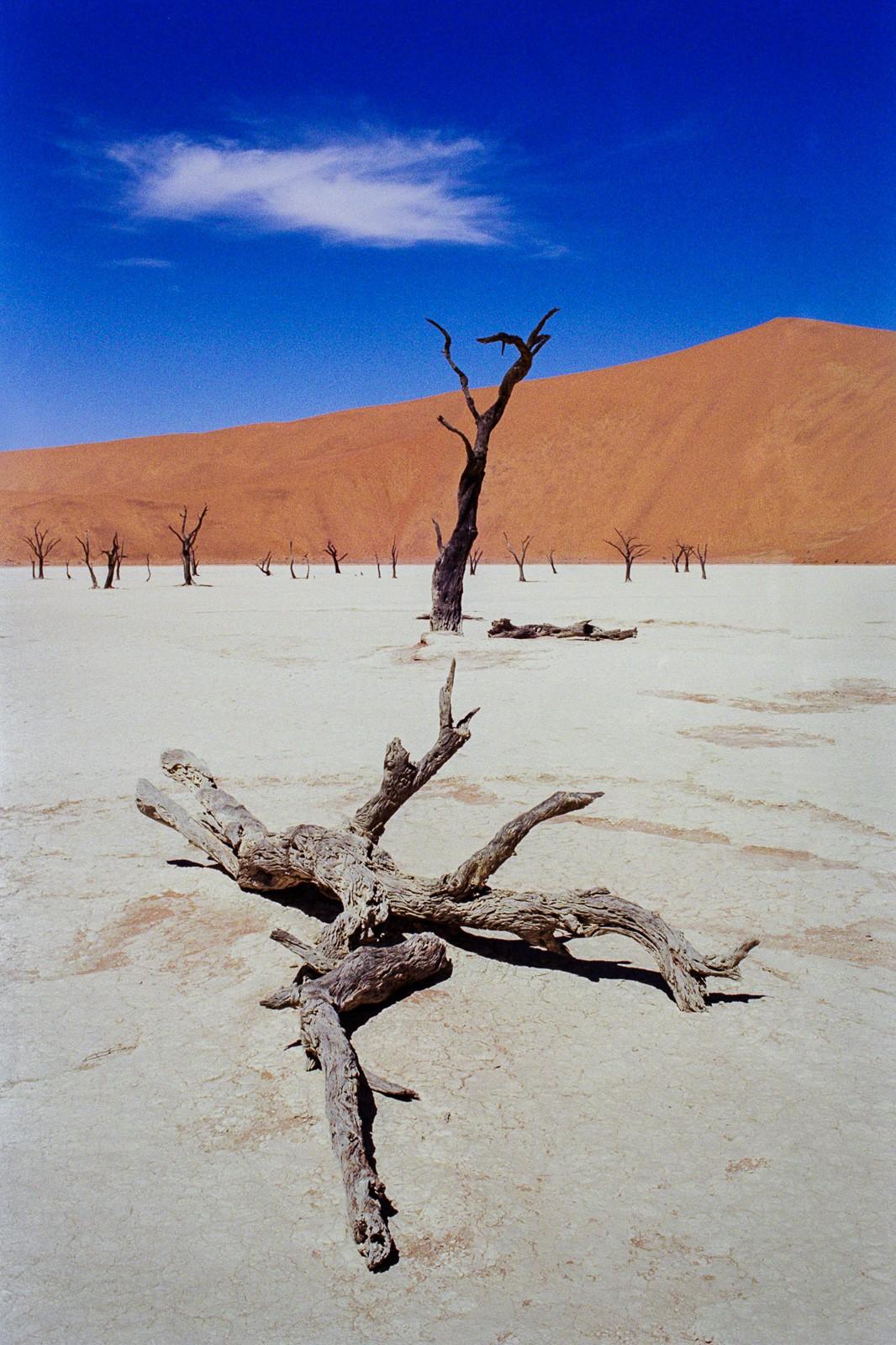 namibia desert scene in deadvlei dead trees in salt pan
