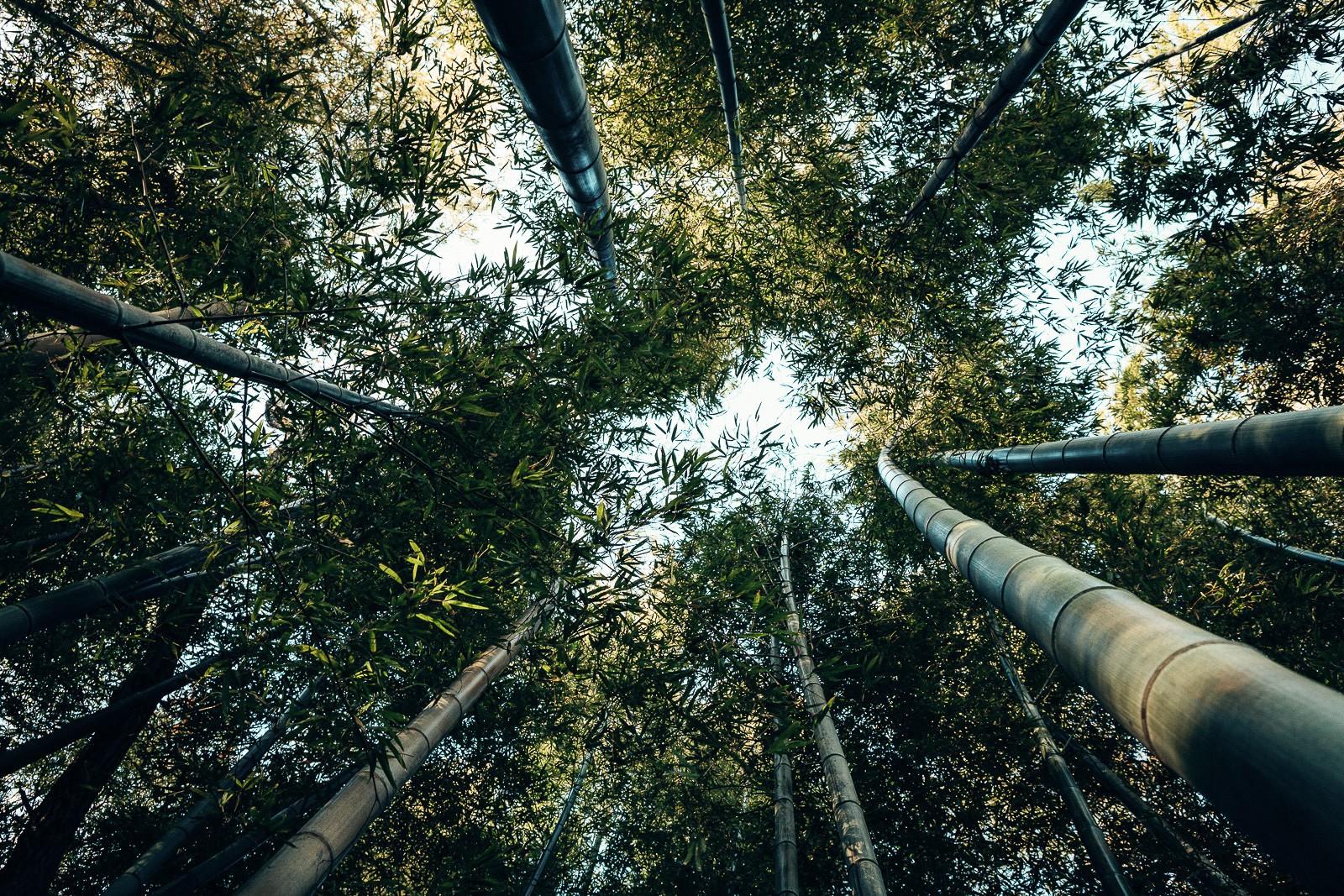 tokyo-trees-13.jpg