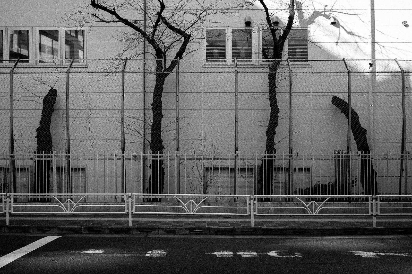 tokyo-trees-08.jpg