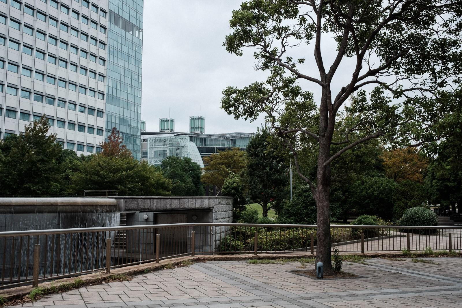 tokyo-trees-05.jpg