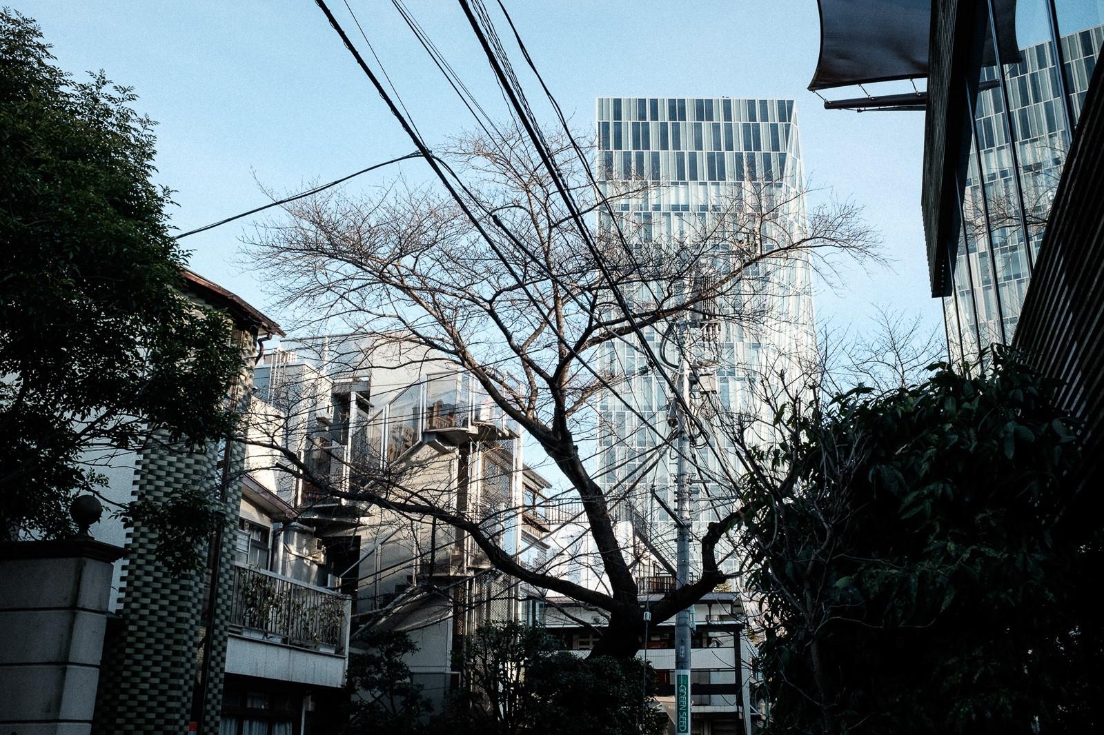 tokyo-trees-11.jpg