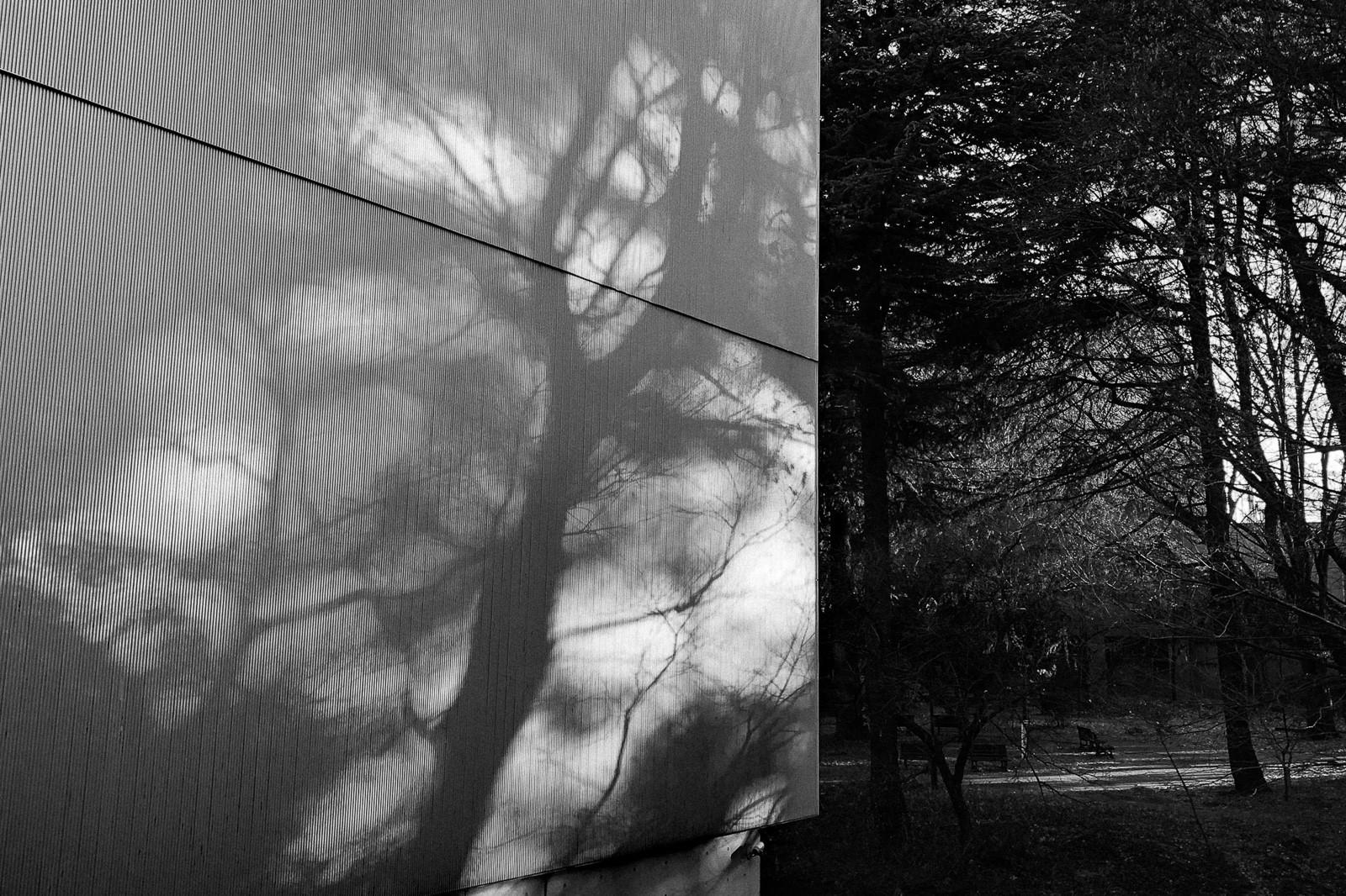 tokyo-trees-06.jpg