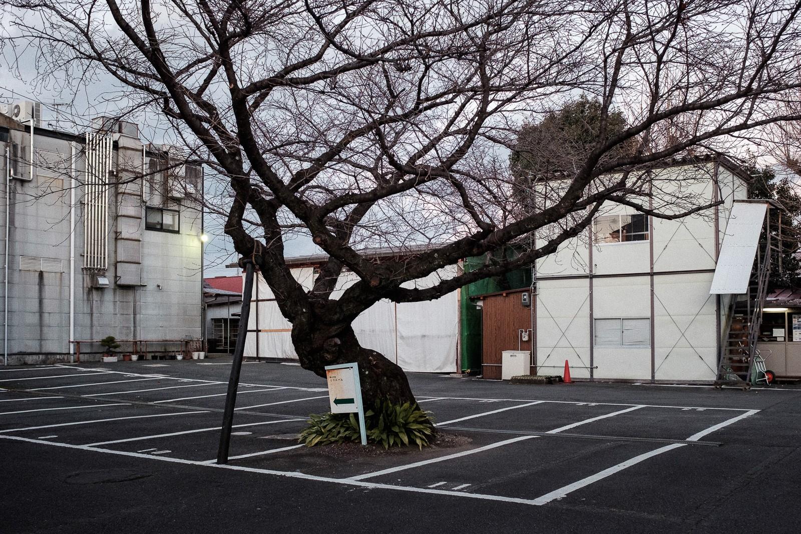 tokyo-trees-12.jpg