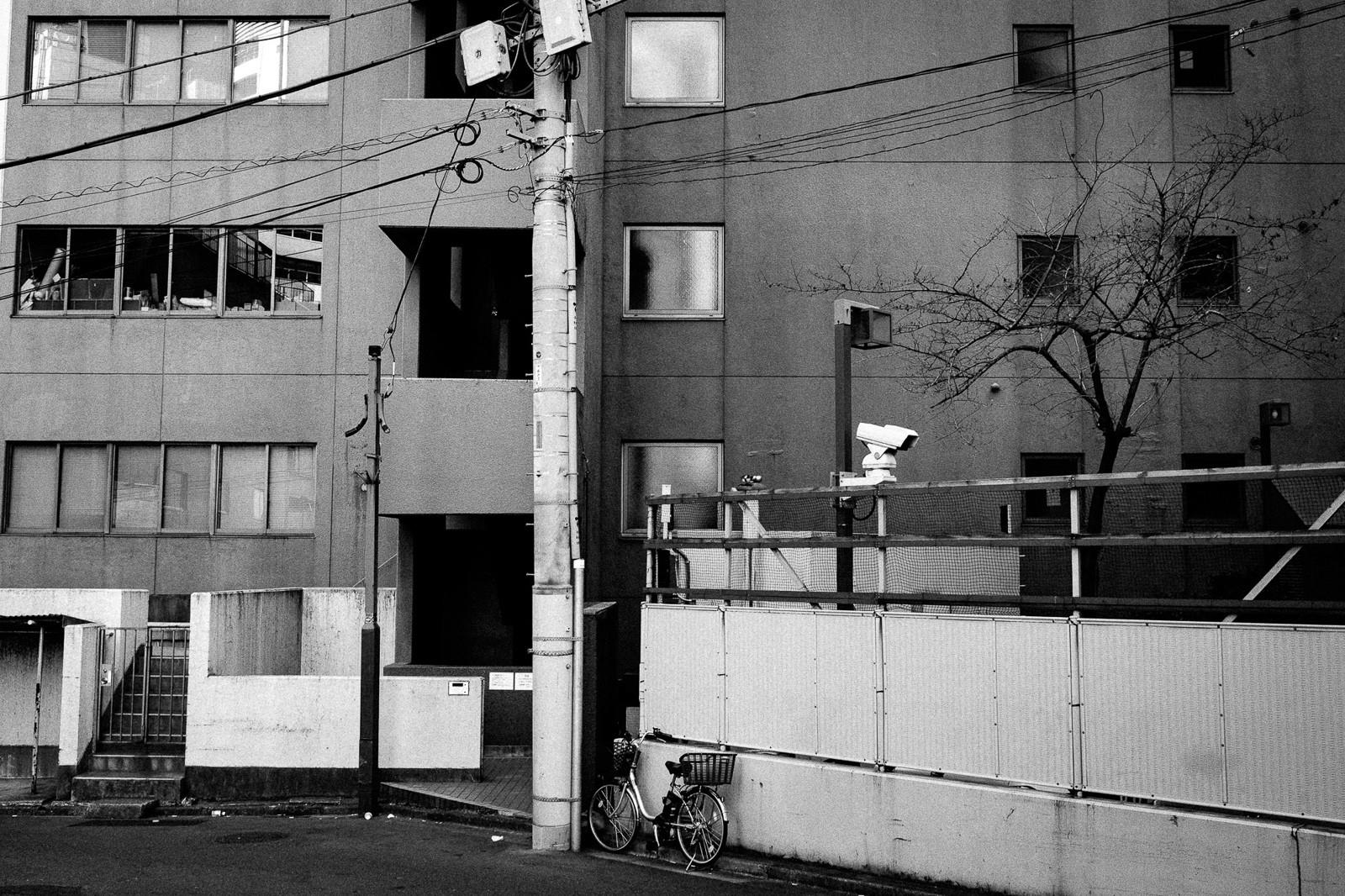 tokyo-trees-07.jpg