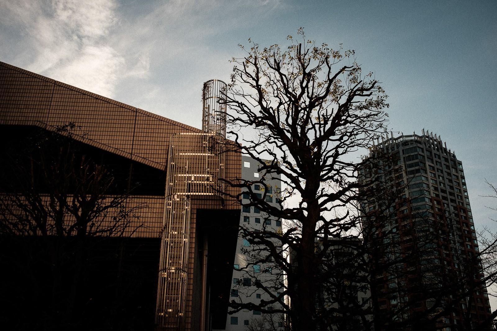 tokyo-trees-03.jpg