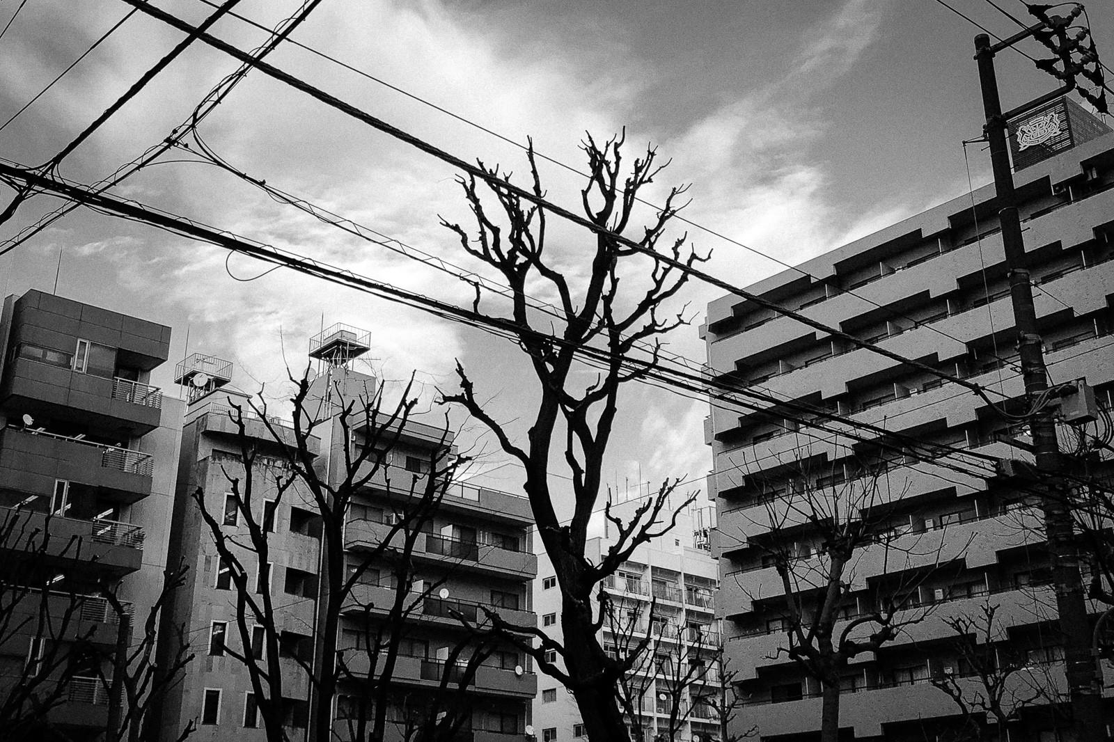 tokyo-trees-02.jpg